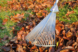 Chester Leaf Clearing